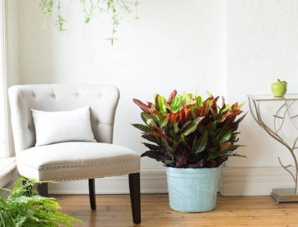 How to Move Indoor and Garden Plants (1)